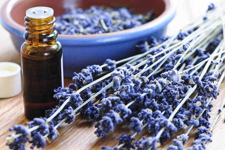 EcoLux☆Lifestyle: 10 Most Expensive Essential Oils in the World