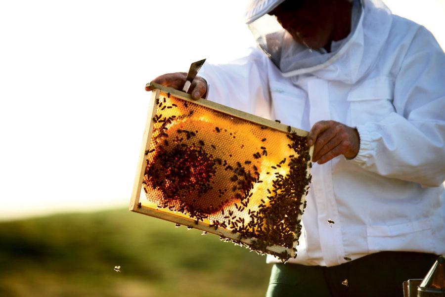 guerlain, bee school, mona butler, helen siwak, ecoluxluv, folioyvr, vancouver, bc, vancity, yvr, beauty, sustainability