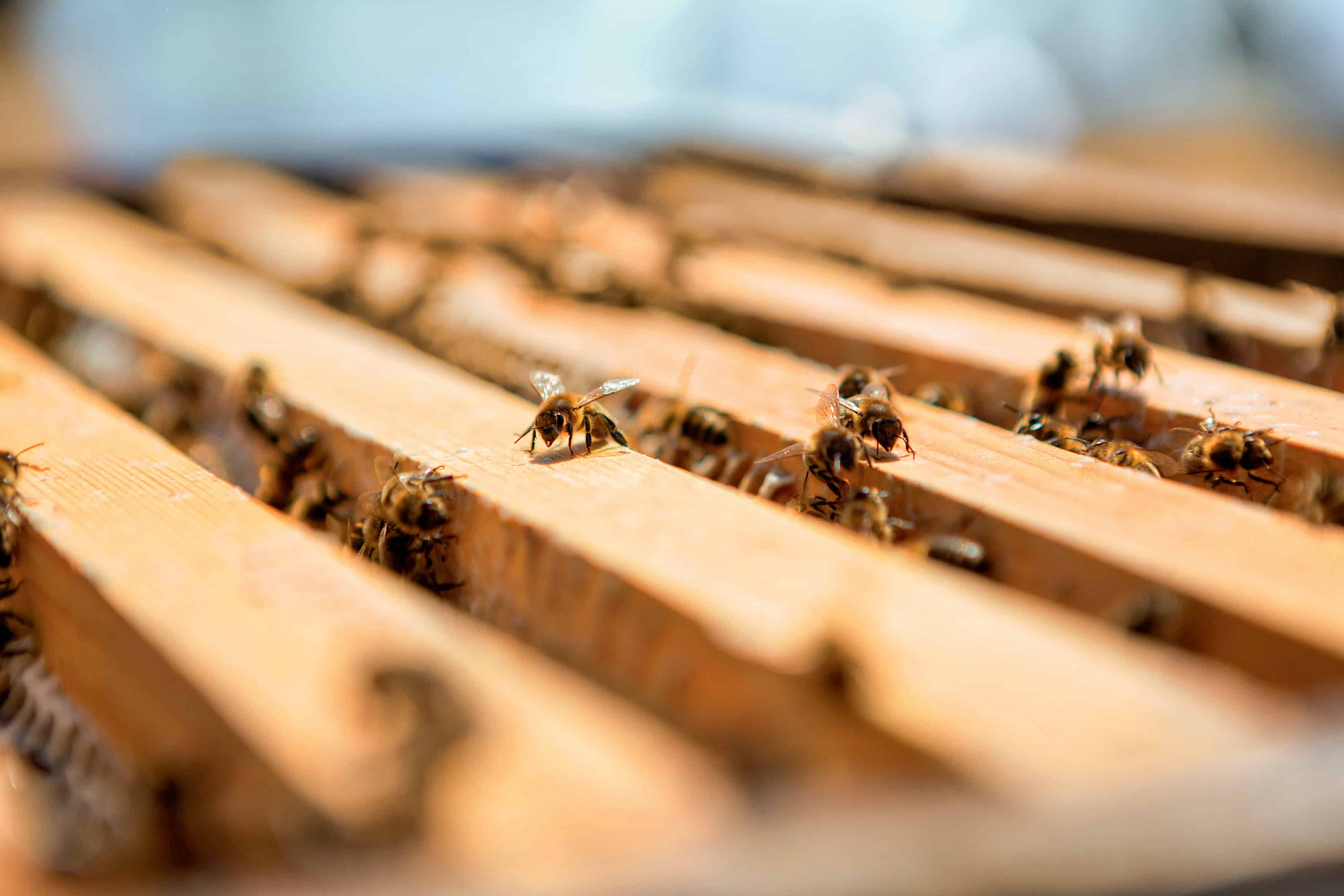 EcoLux☆Lifestyle: Guerlain Bee School Spreads Conservation Awareness