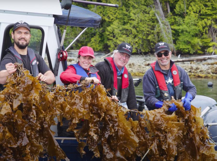 Cascadia Seaweed, Plantbased, Sustainability, Helen Siwak, EcoLuxLuv, Vancouver Island, Vancouver, BC, Vancity, YVR