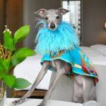 tika the iggy, poshmark, ecoluxlifestyle, helen siwak, vancity, vancouver, bc, yvr, famous pets, dog outfits